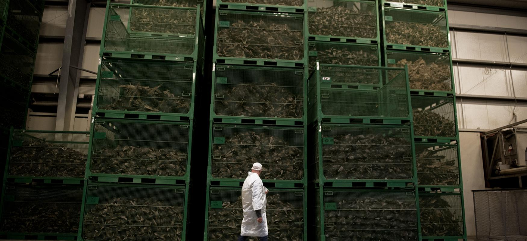 Man walking in a warehouse, with boxes of dried fish in the background.